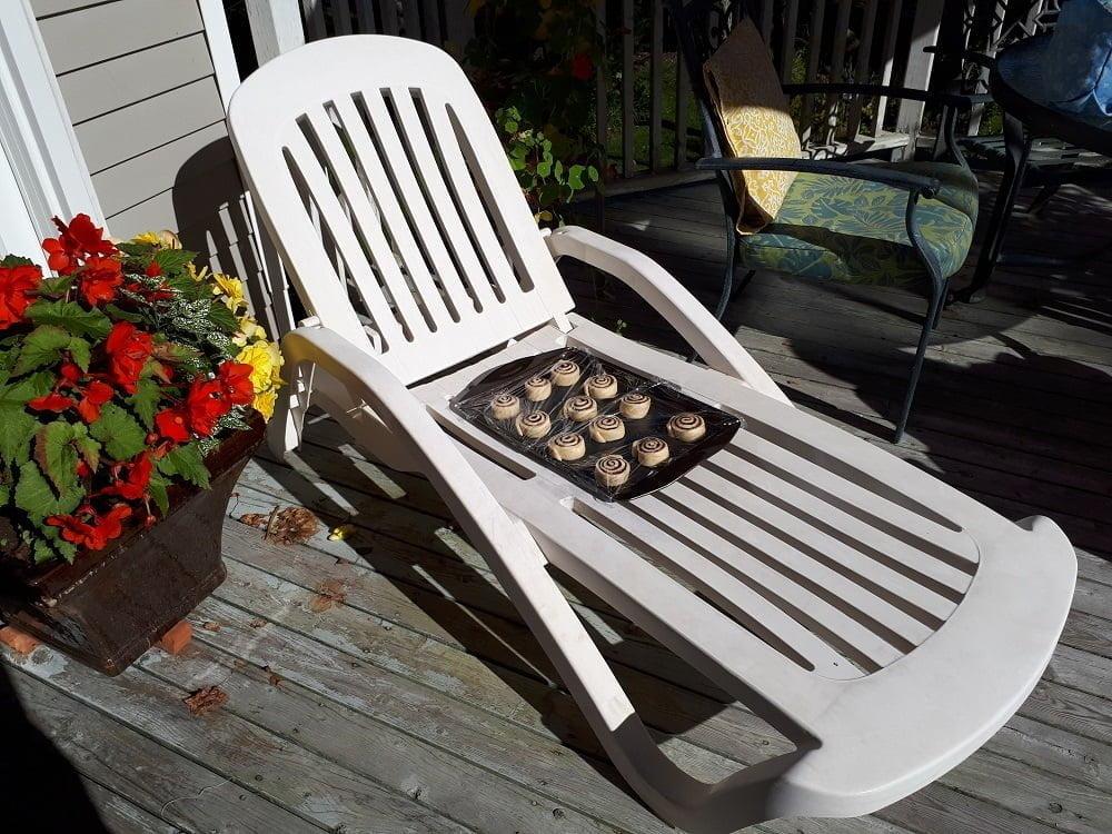 cinnamon buns rising in the sun of Nova Scotia